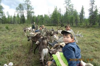 Продирась сквозь кочки и болота оленеводы ищут место для стойбища