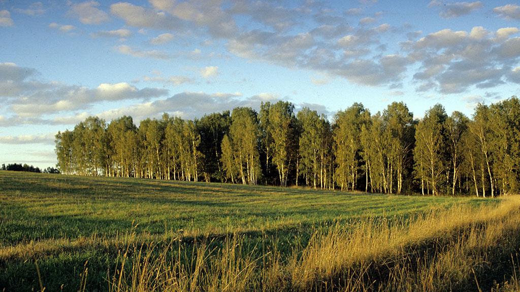 В прошлом году курские лесоводы посадили более 400 га леса
